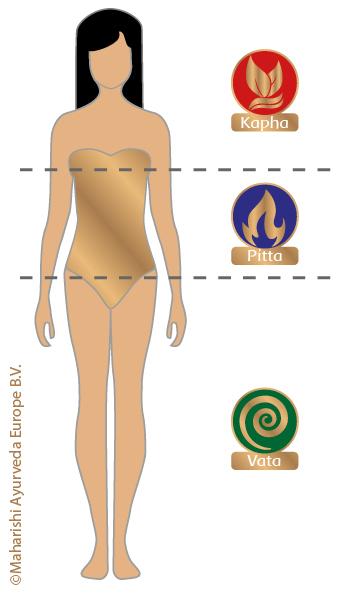 Verteilung von Vata, Pitta & Kapha im Körper